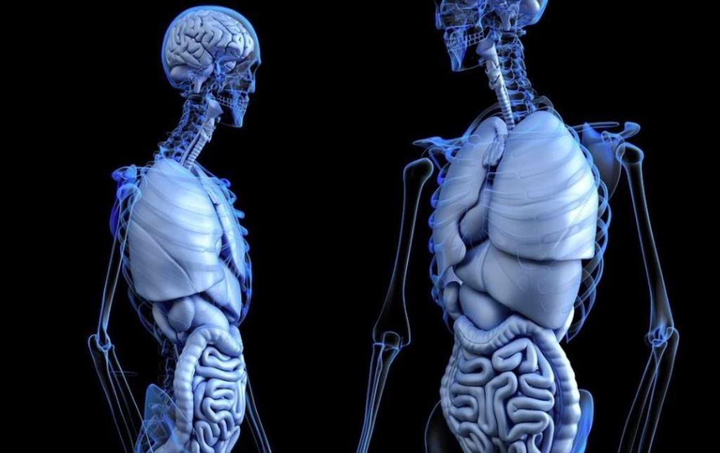 """Sesión científica """"El médico en la donación y el trasplante de órganos: implicaciones éticas"""""""
